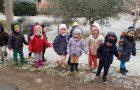 Pikapolonice v januarju